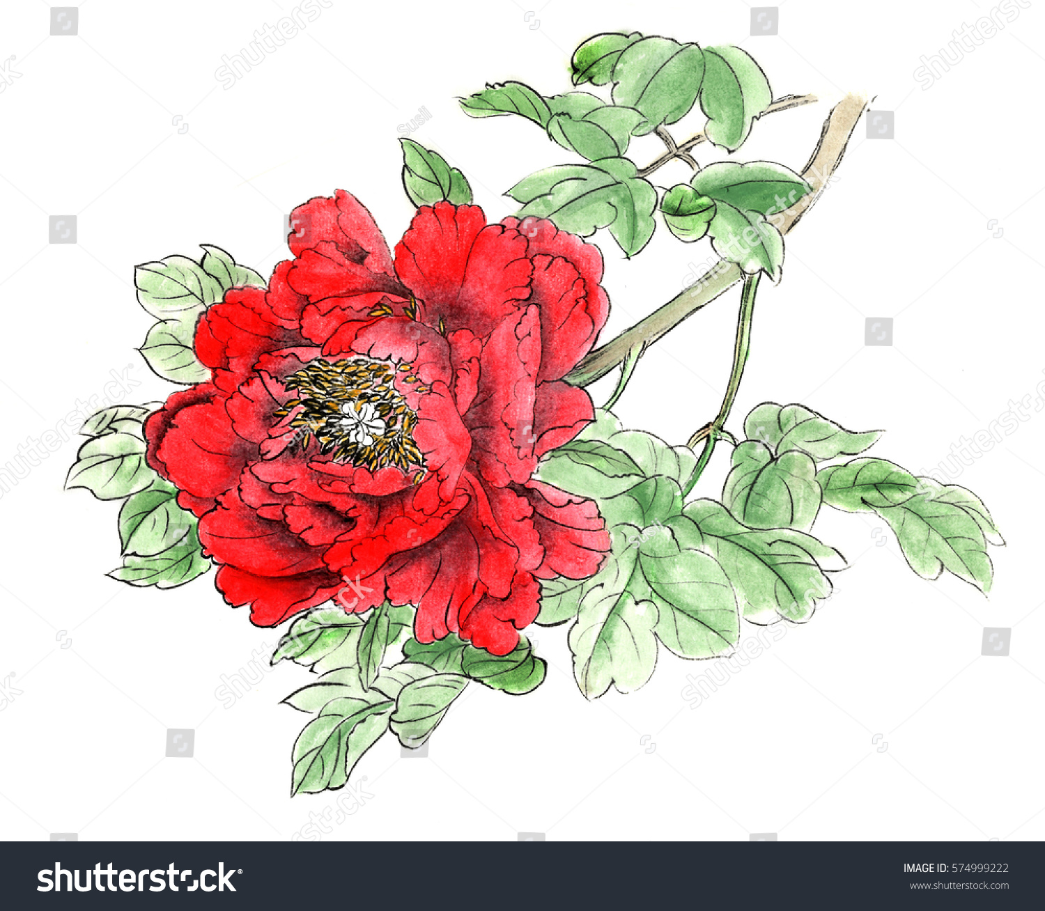 chinese traditional hand painted color drawing peony - Color Drawing Pictures