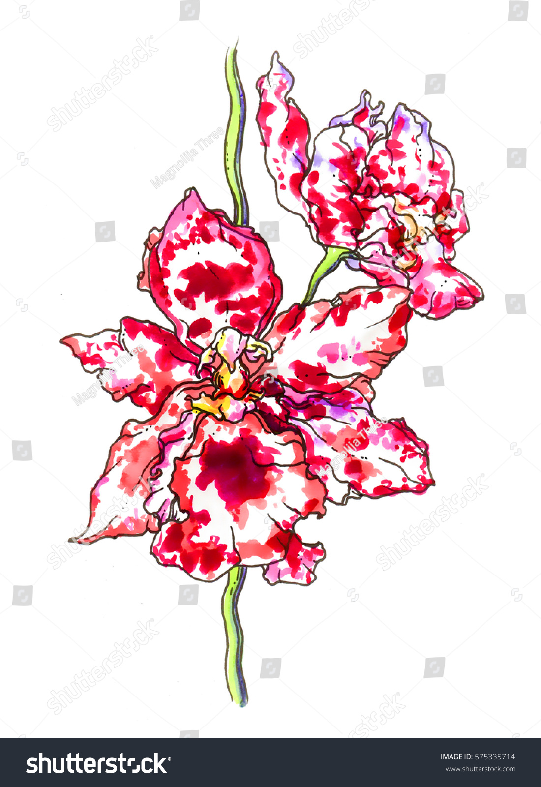 Red Orchid Flowers On Branch Blossom Stock Illustration 575335714 ...