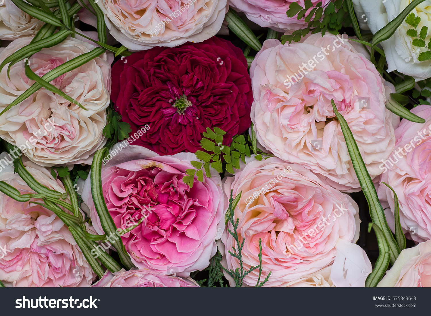 Very beautiful english roses background valentine stock photo edit the very beautiful english roses background for valentine izmirmasajfo