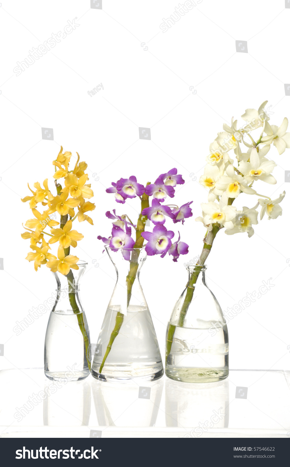 Three colorful orchids small glass vases stock photo 57546622 three colorful orchids in small glass vases reviewsmspy