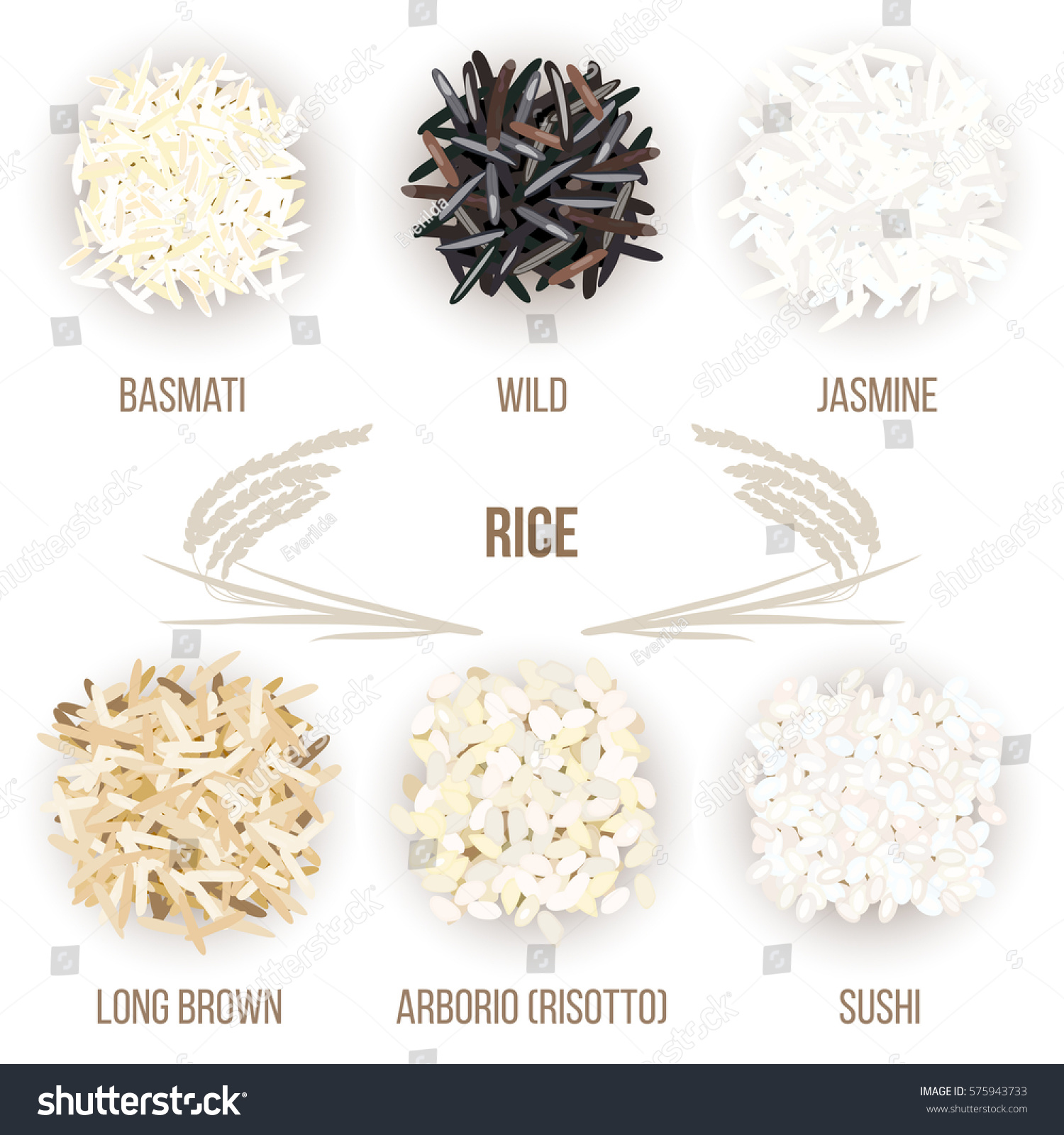 Different Types Rice Grains Isolated On Stock Vector
