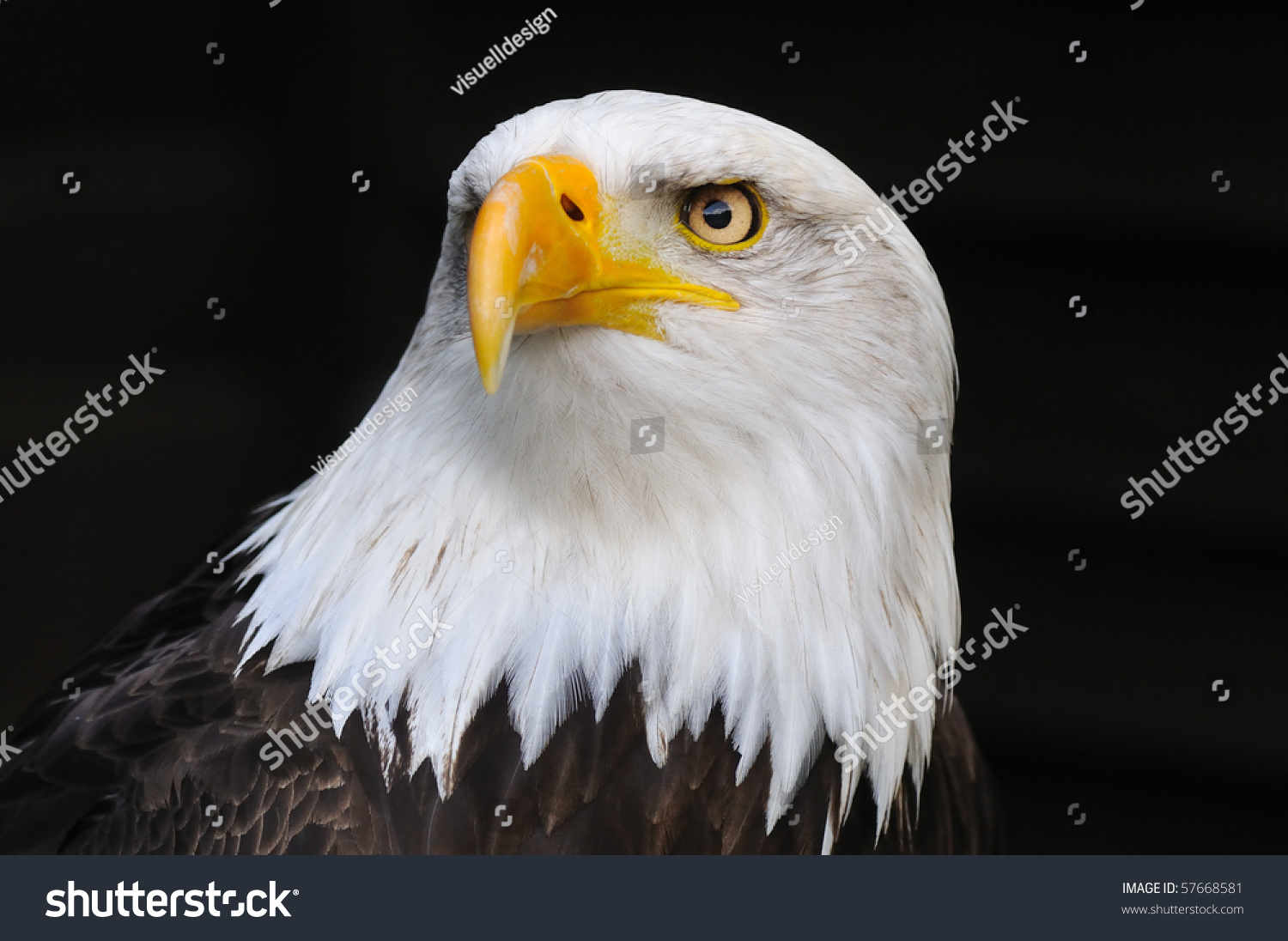 """the lost symbol of freedom in the united states The robert langdon who writes books about symbols and religion, aren't you""""   the us capitol was a half hour away, and he appreciated the time  almost  three hundred feet in the air, the statue of freedom peered out into the misty."""