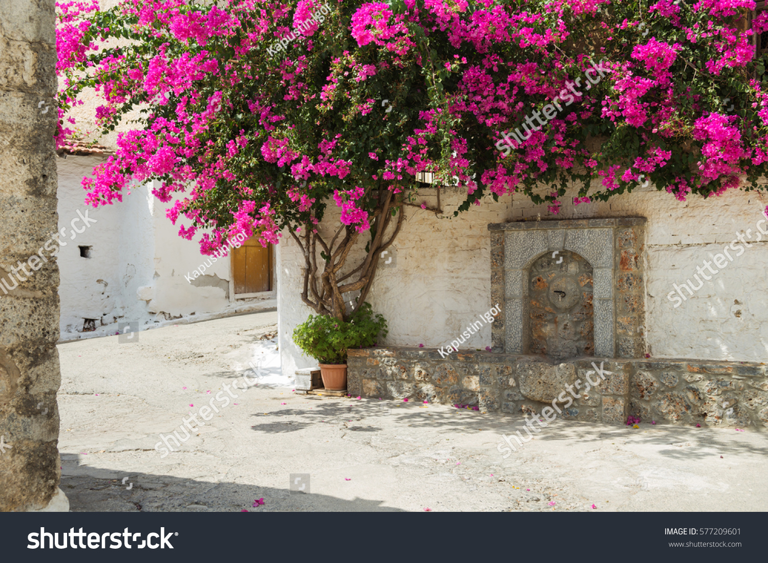 Pink Flowers On Tree Village Greece Stock Photo Edit Now 577209601