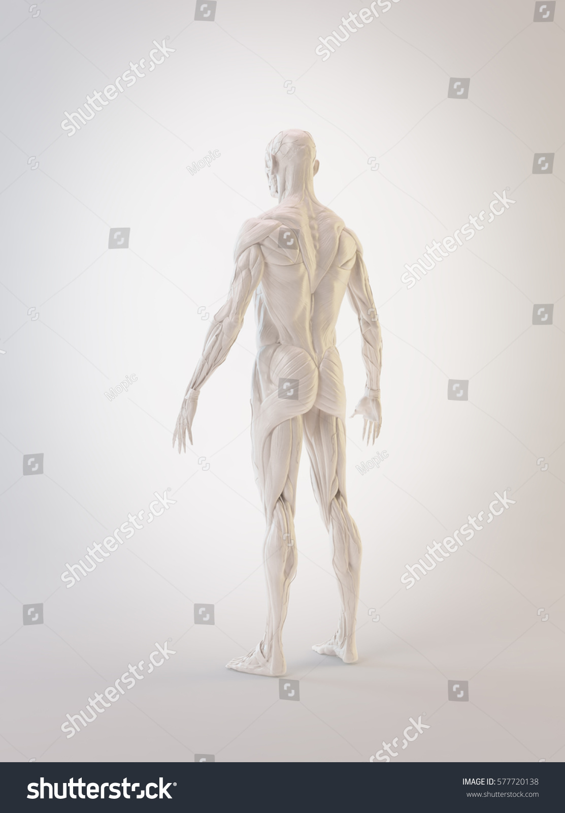 Detailed Muscle Human Anatomy 3 D Illustration Stock Illustration
