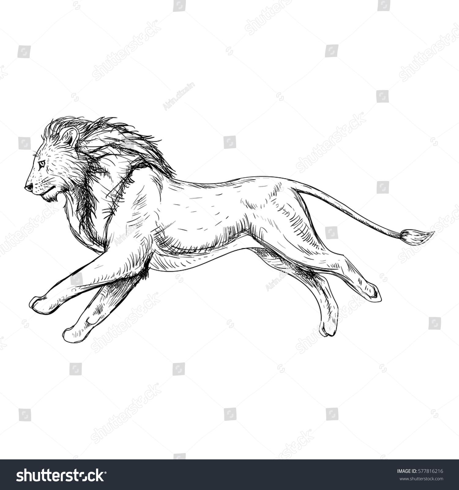 Hand Drawn Sketch Running Lion Retro Stock Vector Royalty