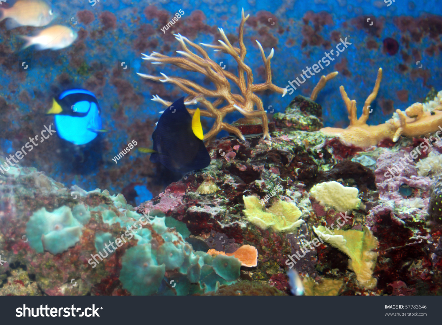 Plate coral stock photo 57783646 shutterstock for Fish plates near me
