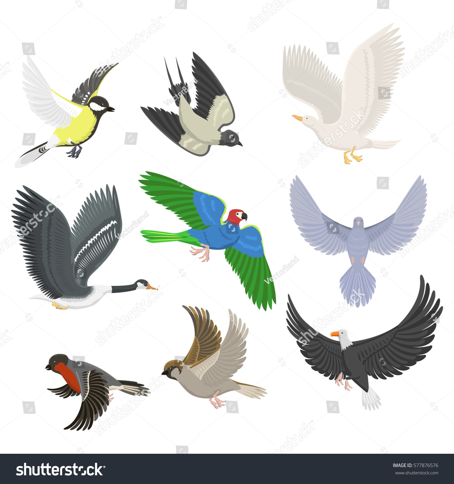 Set of sketches of flying swallows stock vector illustration - Set Of Different Flying Birds Vector Illustration