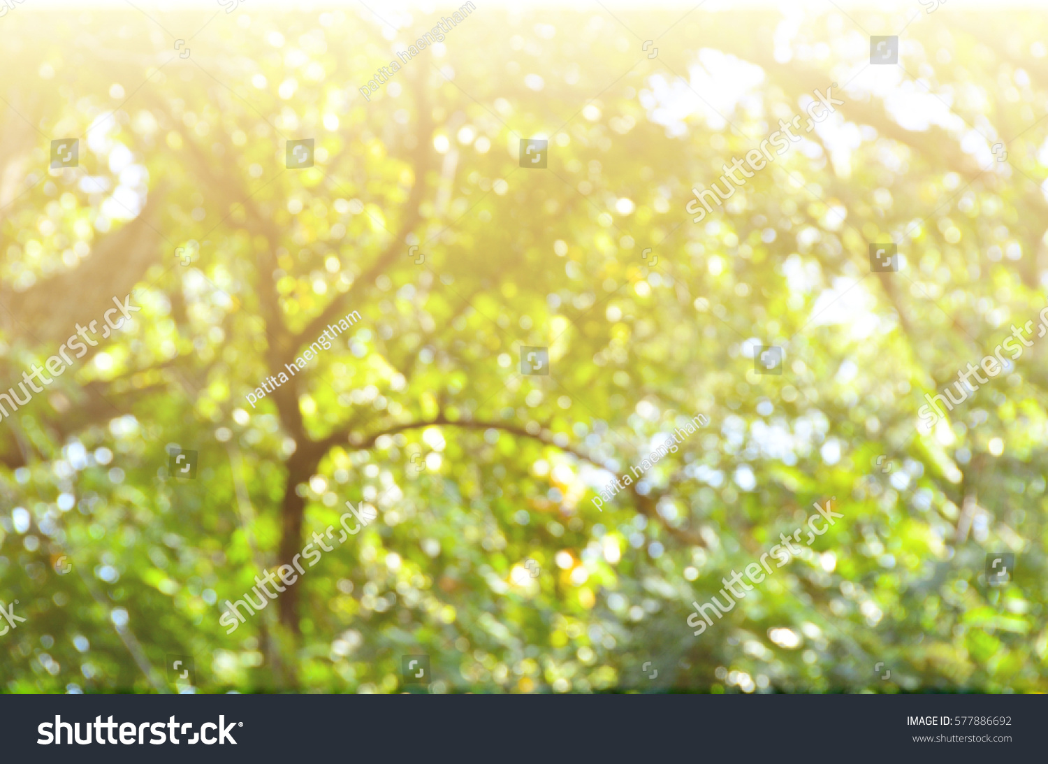 Abstract Art Background Wallpaper Bokeh Green Nature Blur Color
