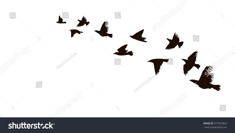 Flock Flying Birds Starlings Vector 577957852