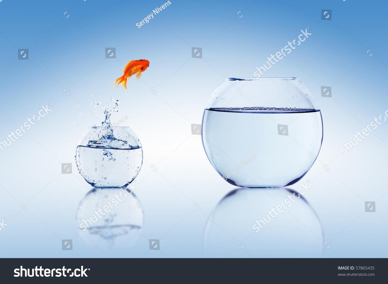 Royalty Free Goldfish Jump Into The Aquarium With 57865435 Stock