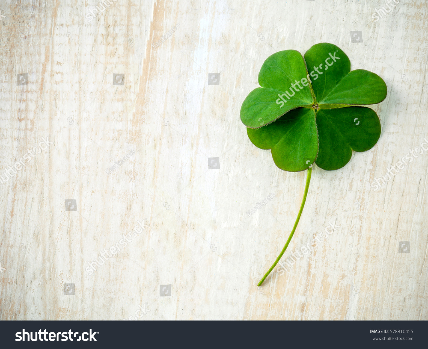 Clovers leaves on shabby wooden background. The symbolic of Four Leaf Clover the first is for faith, the second is for hope, the third is for love, and the fourth is for luck. #578810455