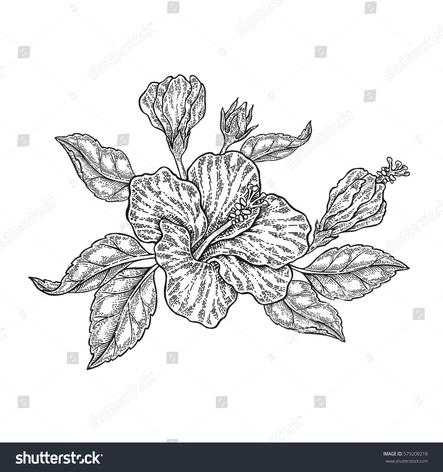 Hand Drawn Vector Tropical Flowers Vintage Floral Composition