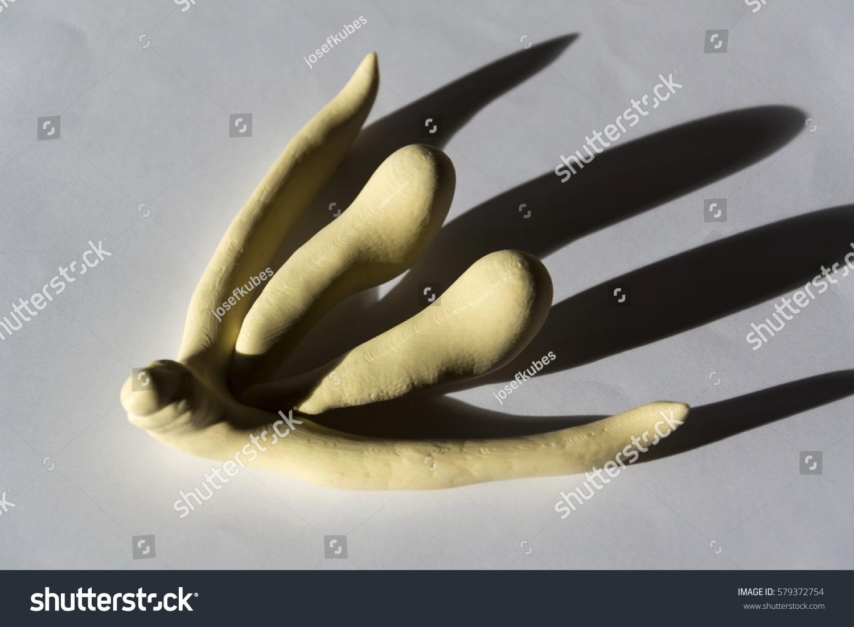 3d printed female sex organ clitoris stock photo 579372754