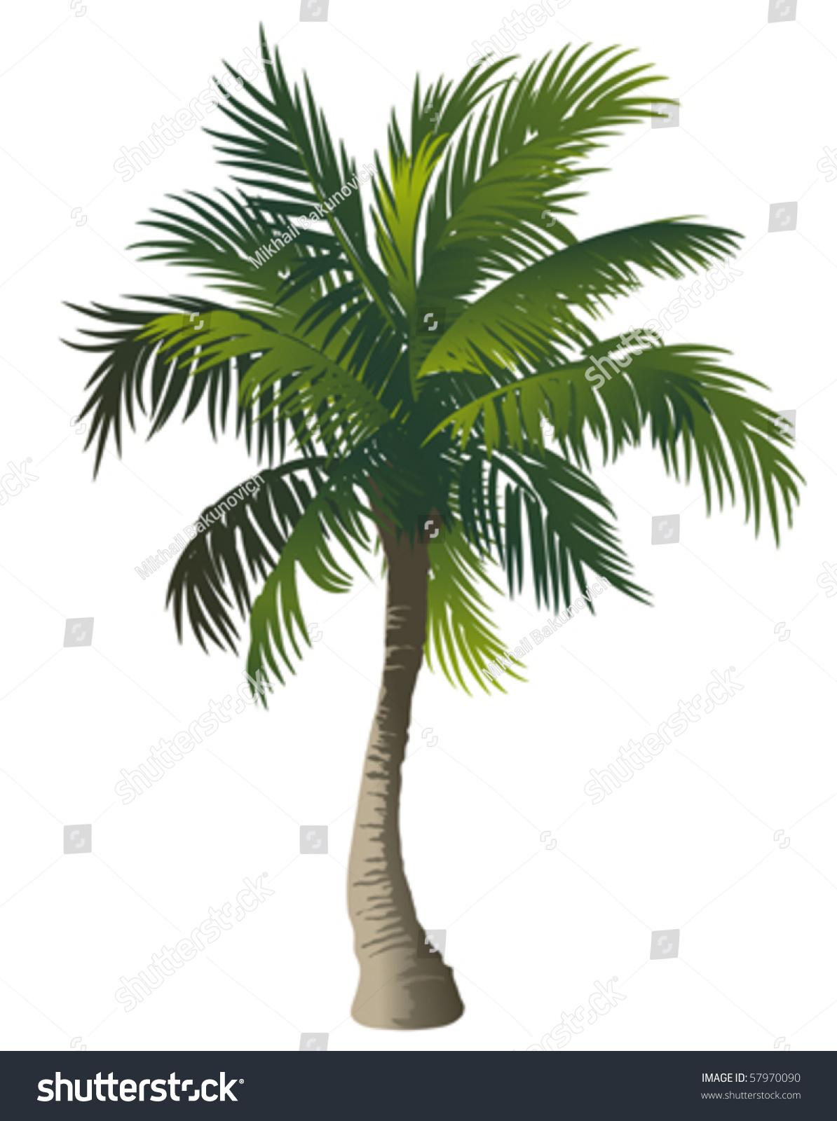 Vector Illustration Tree: Vector Illustration Palm Tree Stock Vector 57970090