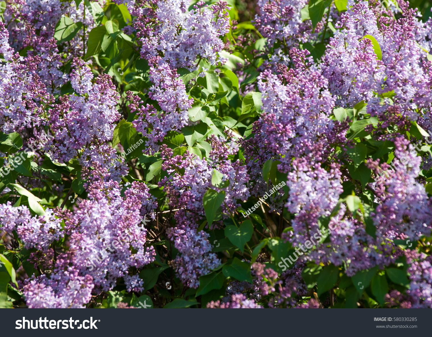 Texture Pattern Background Lilac Flowers Of A Pale Pinkish