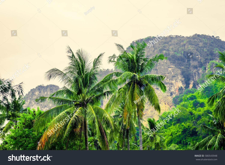 Tropical Landscape Large Rocks Coconut Palm Stock Photo (Royalty ...