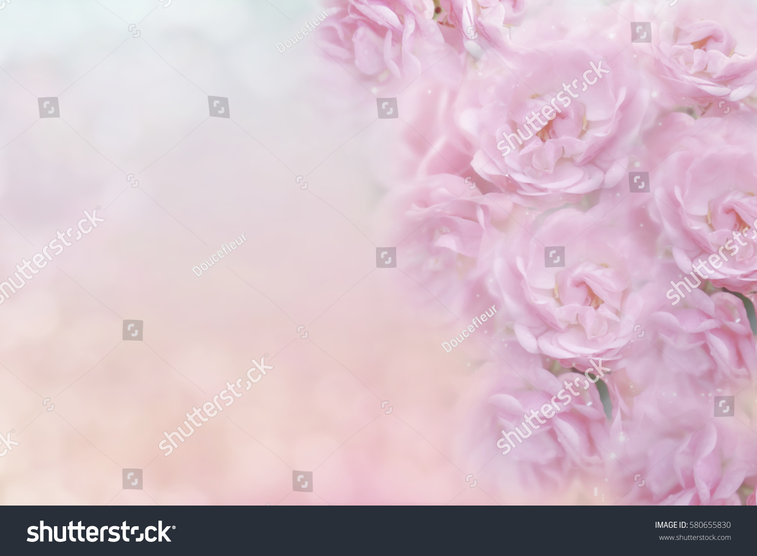 Soft Pink Roses Flower Vintage Color Stock Photo Royalty Free 580655830