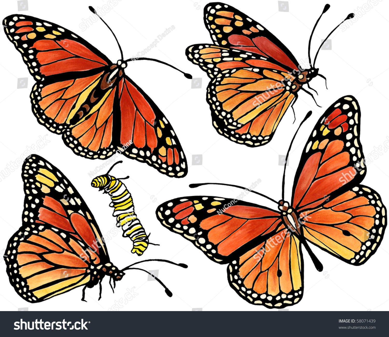 Monarch Butterfly Collection Stock Illustration 58071439