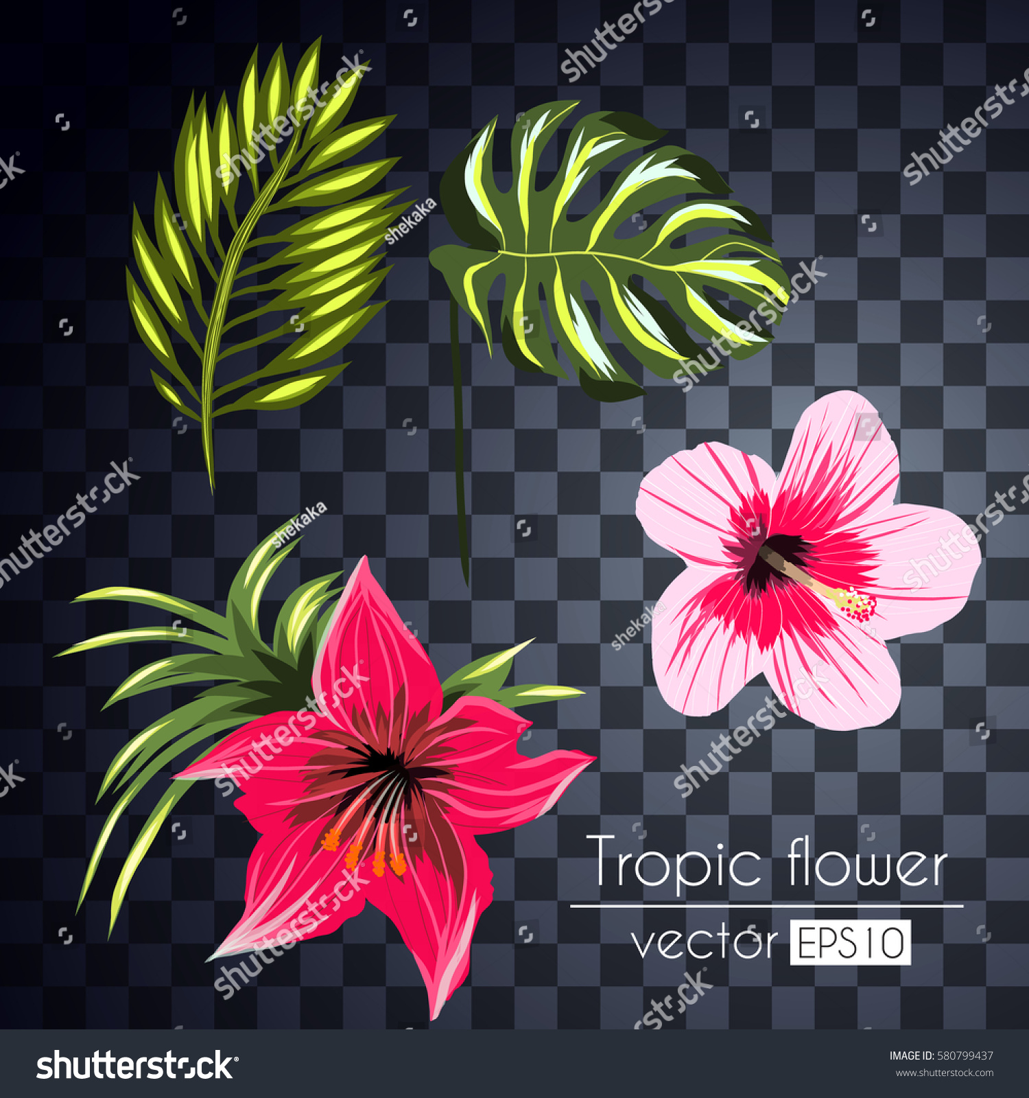 Beautiful tropical flowers collection isolated on stock vector beautiful tropical flowers collection isolated on a transparent background izmirmasajfo
