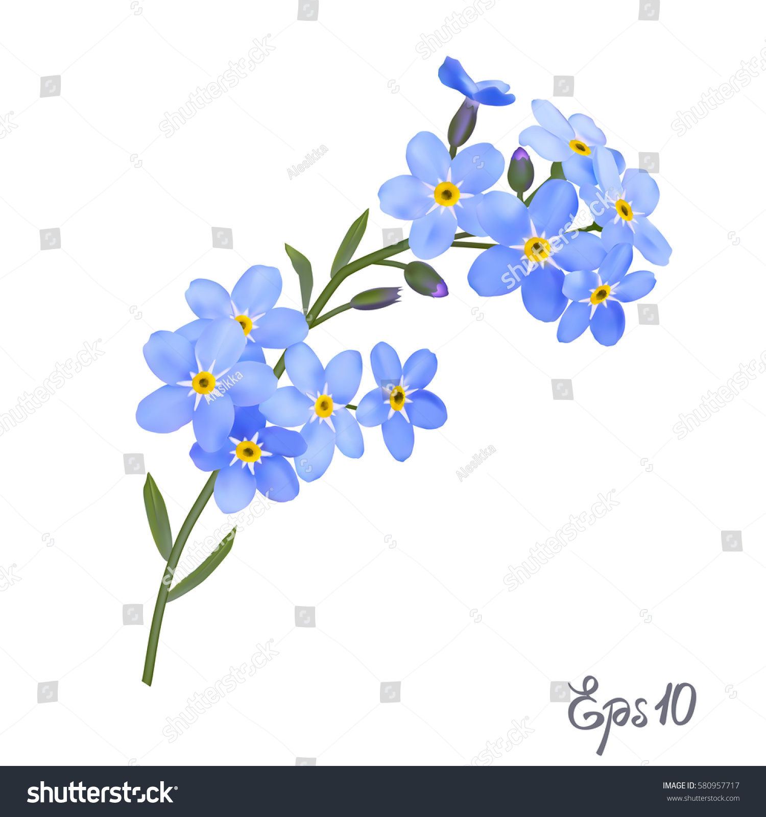 Branch Blue Forgetmenot Flowers Isolated On Stock Vector Royalty