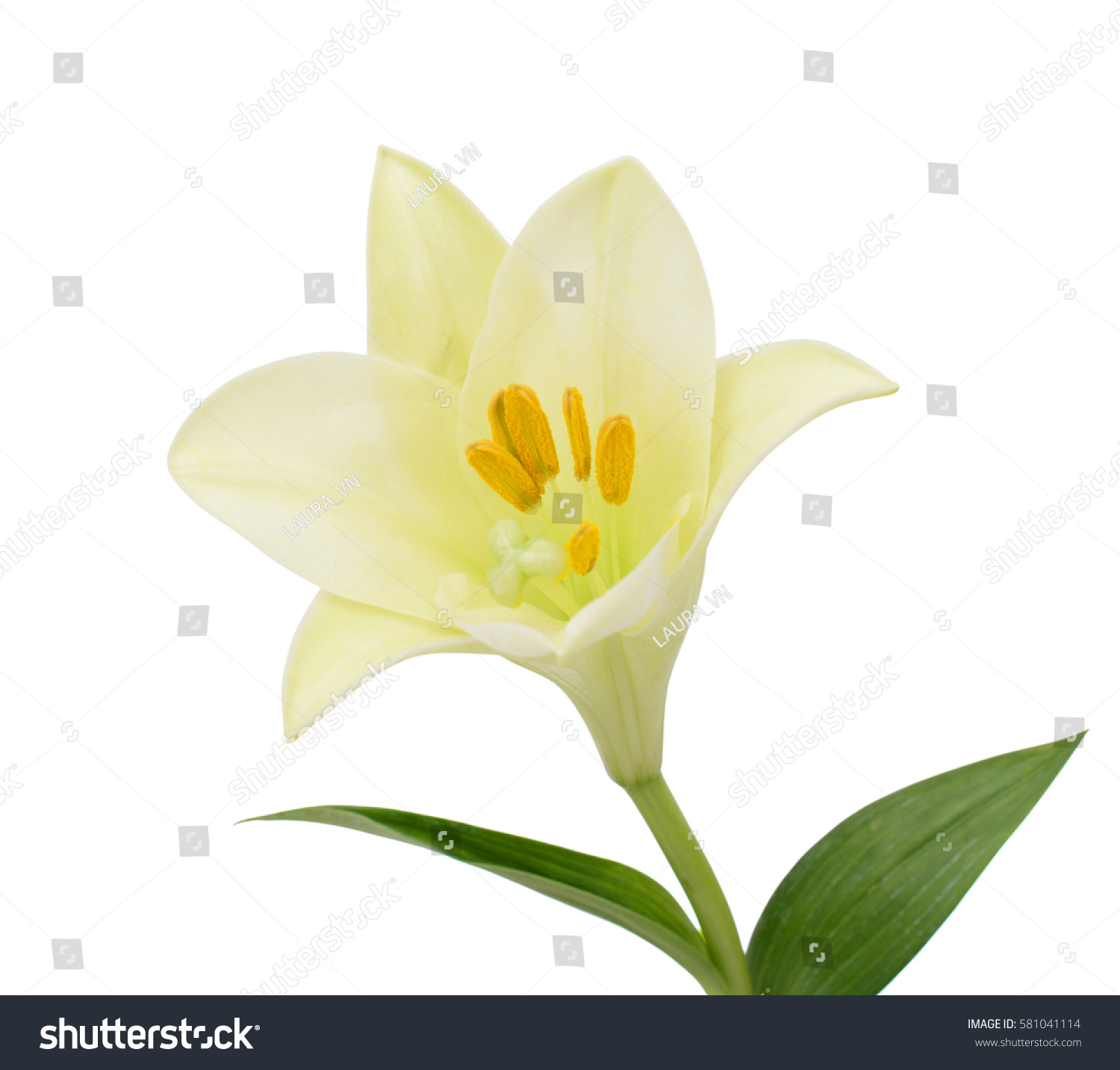 Beautiful easter lily flower isolated on white background ez canvas id 581041114 izmirmasajfo