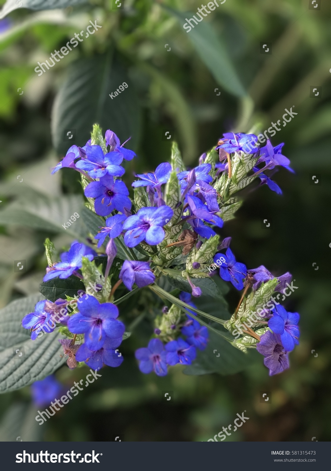 Beautiful plant blue color park winter stock photo royalty free beautiful plant with blue color in a park in winter izmirmasajfo
