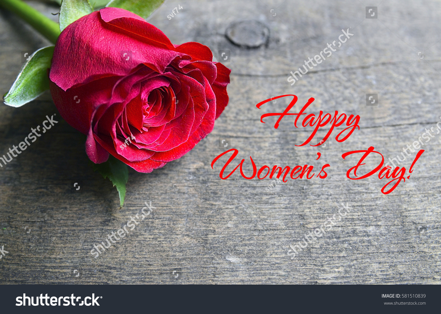 Happy Womens Day Greeting Message Rose Stock Photo Edit Now