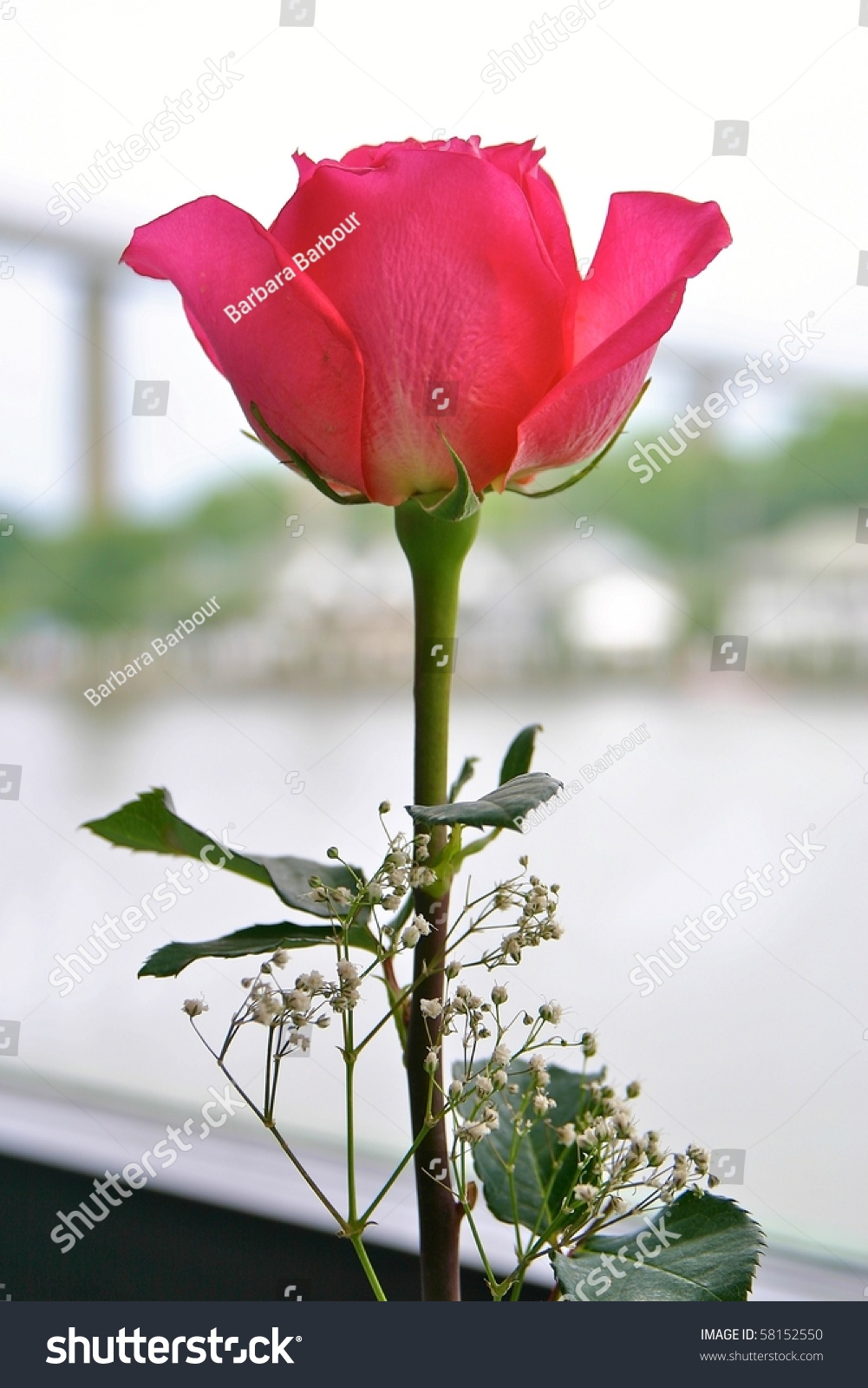 Single rose with babies breath as a table centerpiece