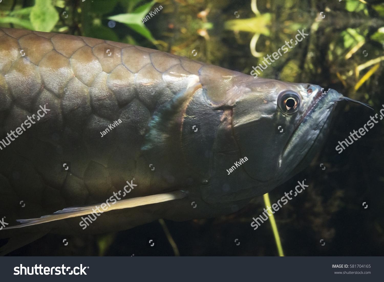Weird Fish Head 6