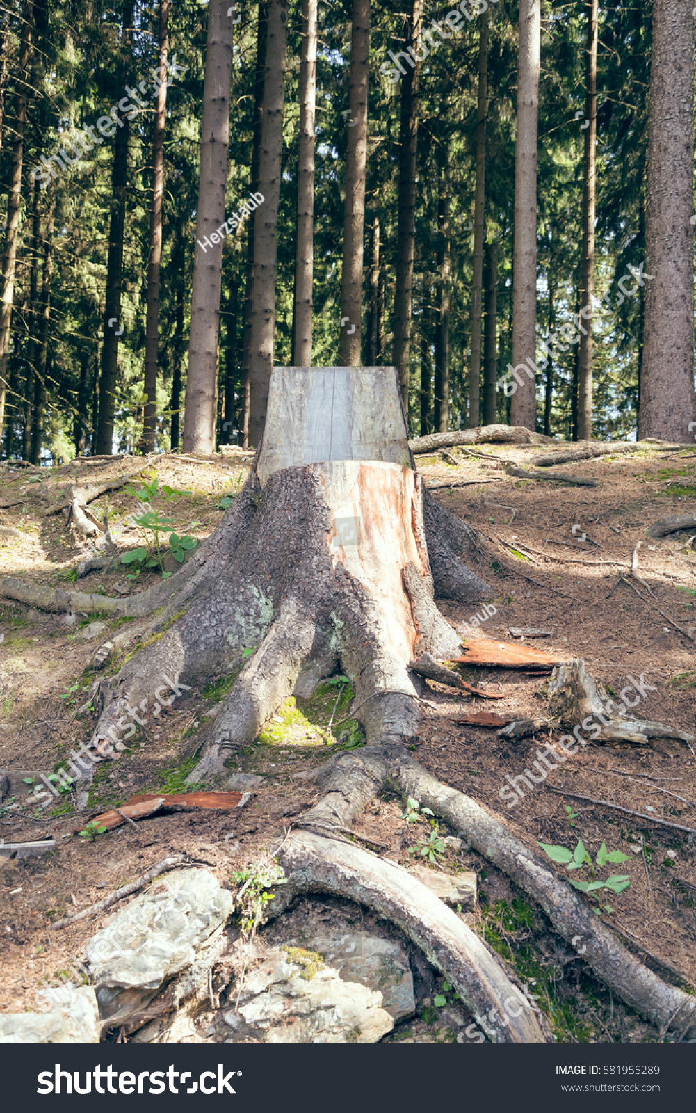 Chair made tree trunk forest stock photo 581955289 - Chair made from tree trunk ...
