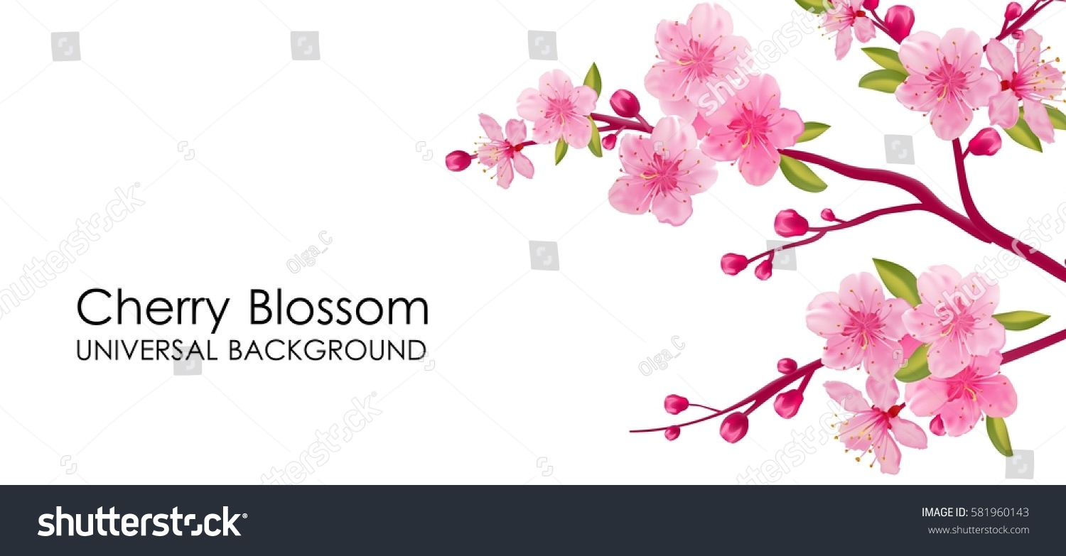Branch Sakura Flowers Leaves On White Stock Vector 581960143 ...