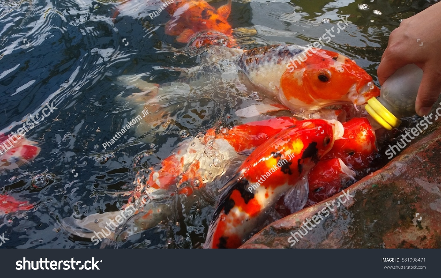 Colorful Fancy Carp Fish Background Koi Fish Stock Photo (Royalty ...