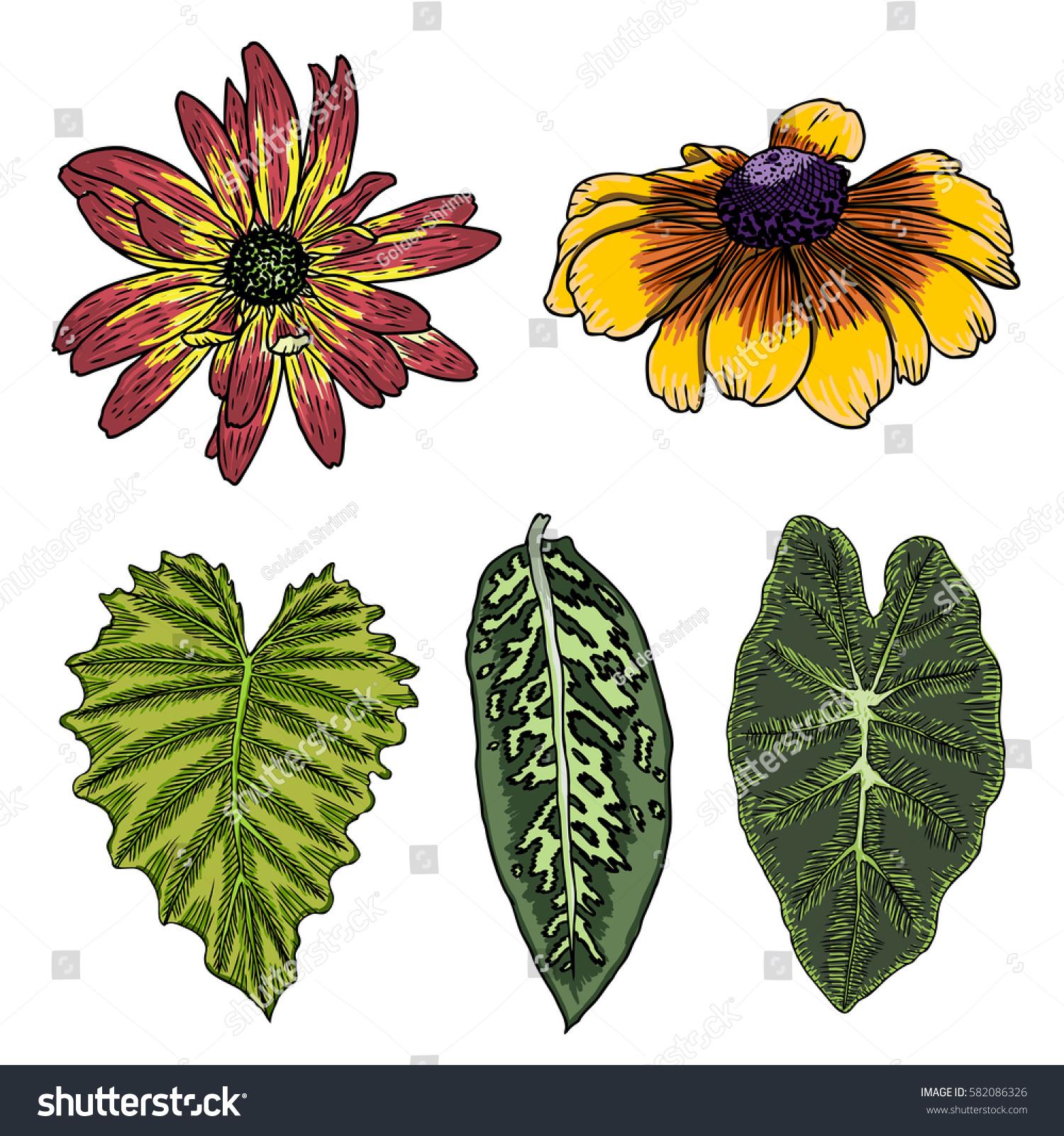 leaf set exotic domestic vintage botanical stock vector 582086326