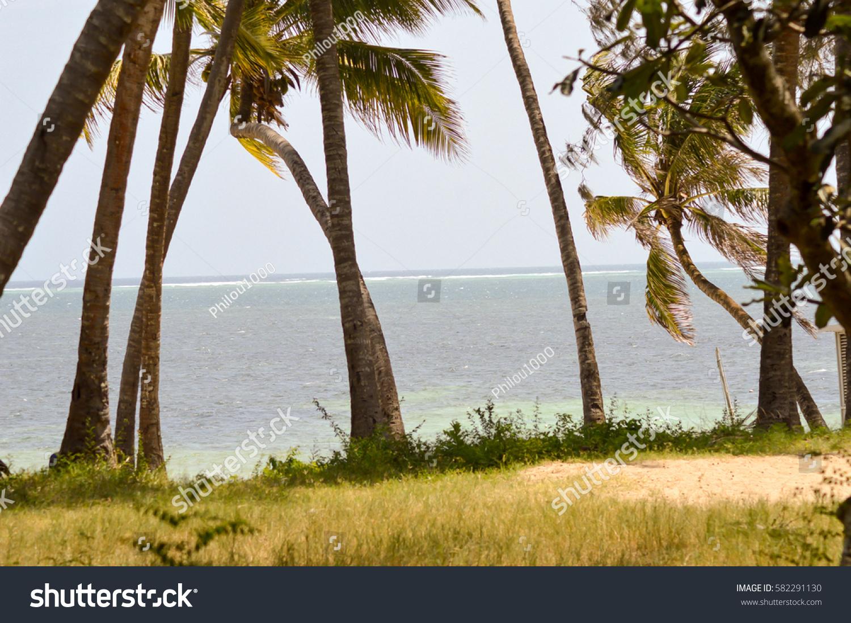 Palms under the blue sky of the Ocean in Mombasa, Kenya
