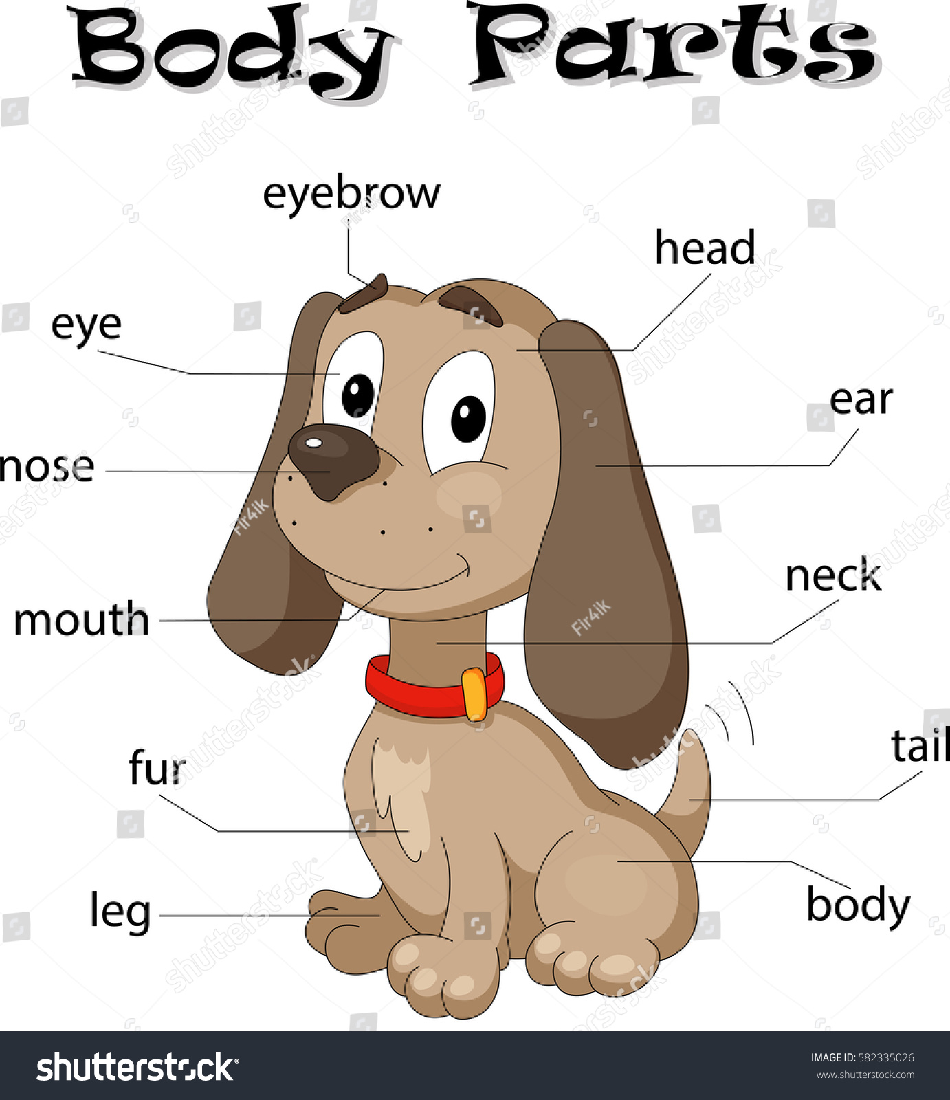 Dog Body Parts Animal Anatomy English Stock Vector (Royalty Free ...