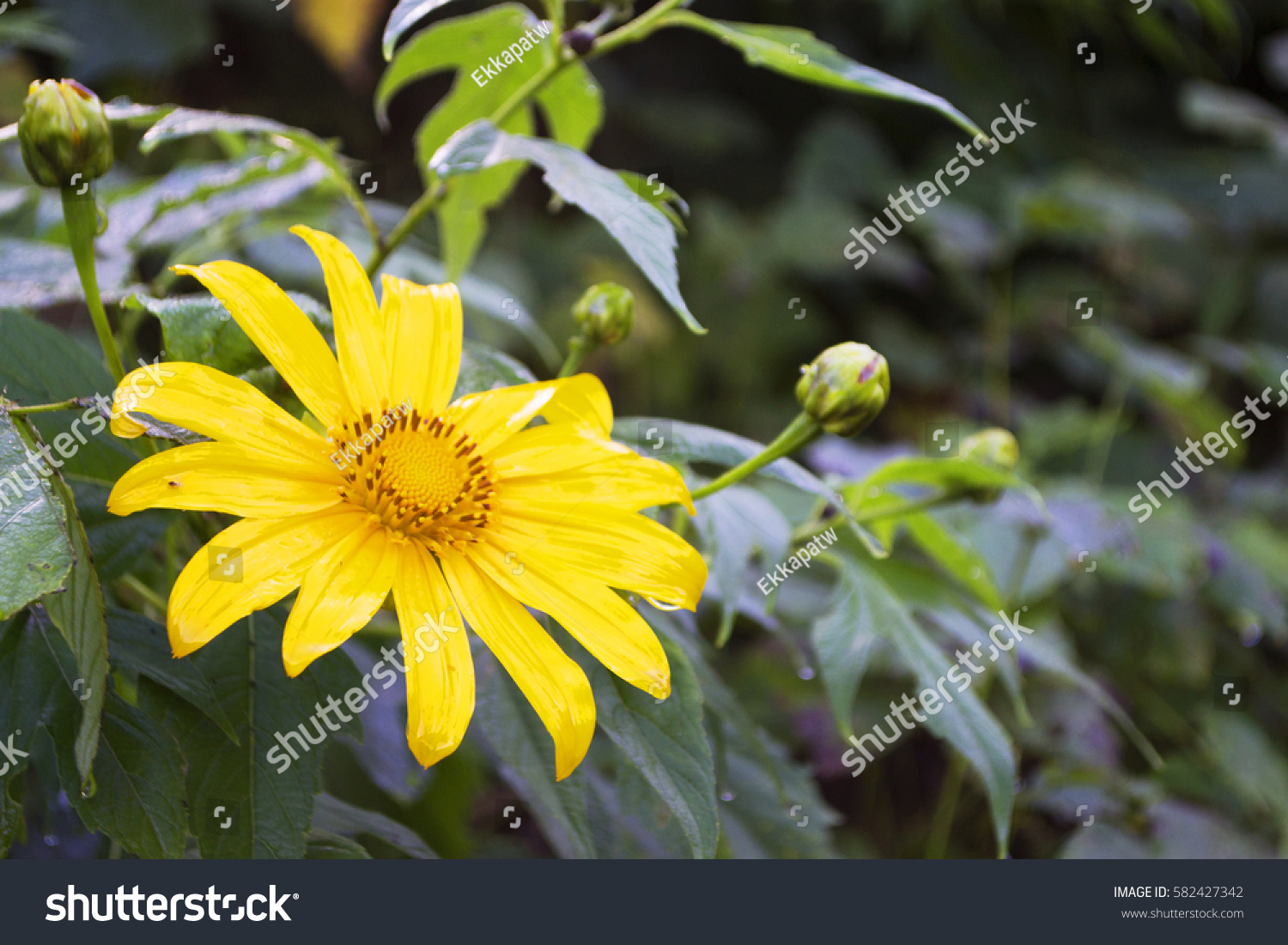 Yellow Flower In Garden Ez Canvas