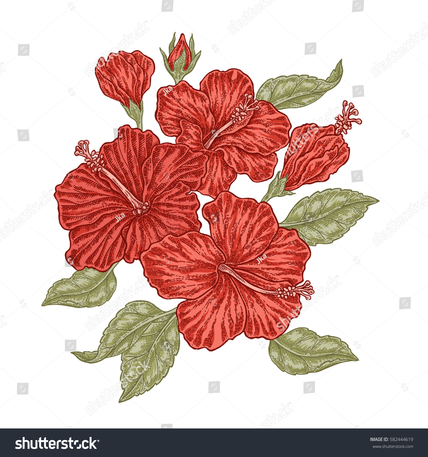 Red Hibiscus Flowers Leaves Vintage Style Stock Illustration
