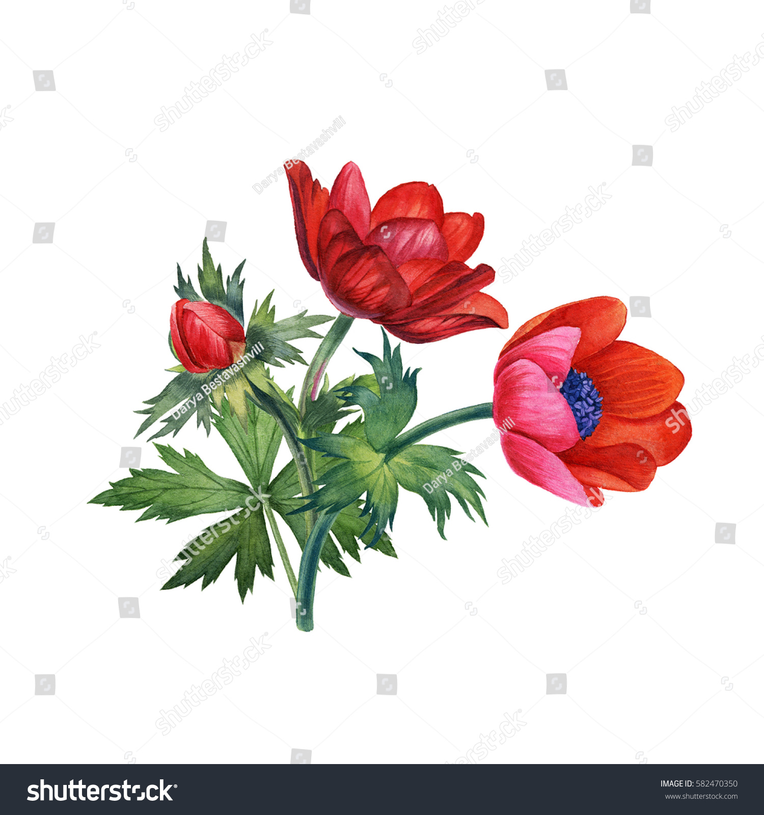 Watercolor Hand Painted Red Flowers Can Stock Illustration 582470350 ...