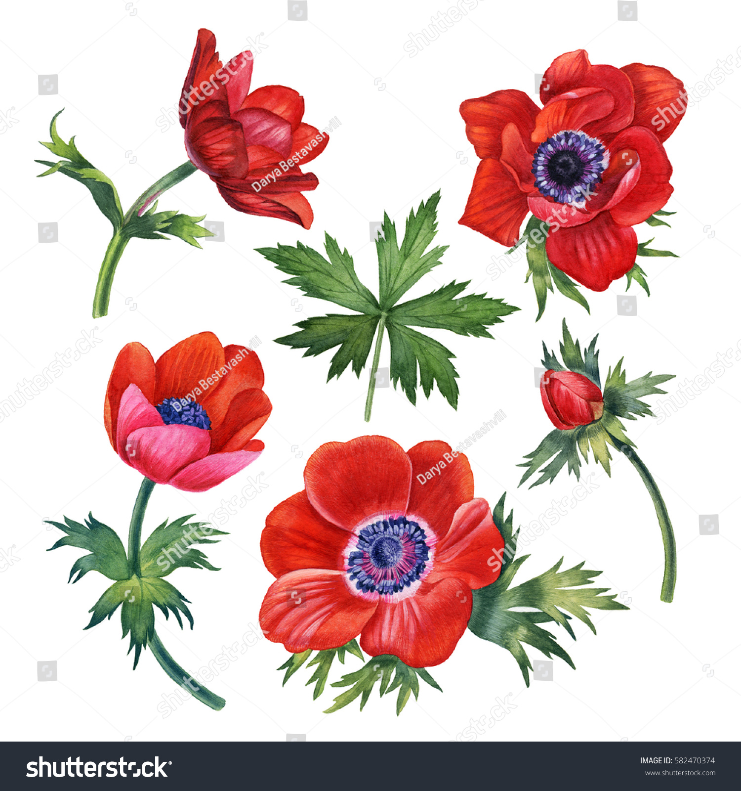 Watercolor Hand Painted Red Flowers Can Stock Illustration 582470374 ...