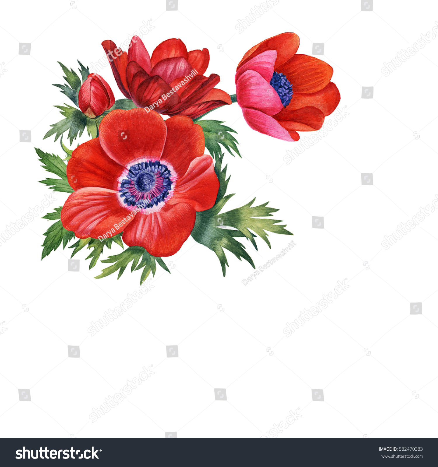 Watercolor Hand Painted Red Flowers Can Stock Illustration 582470383 ...