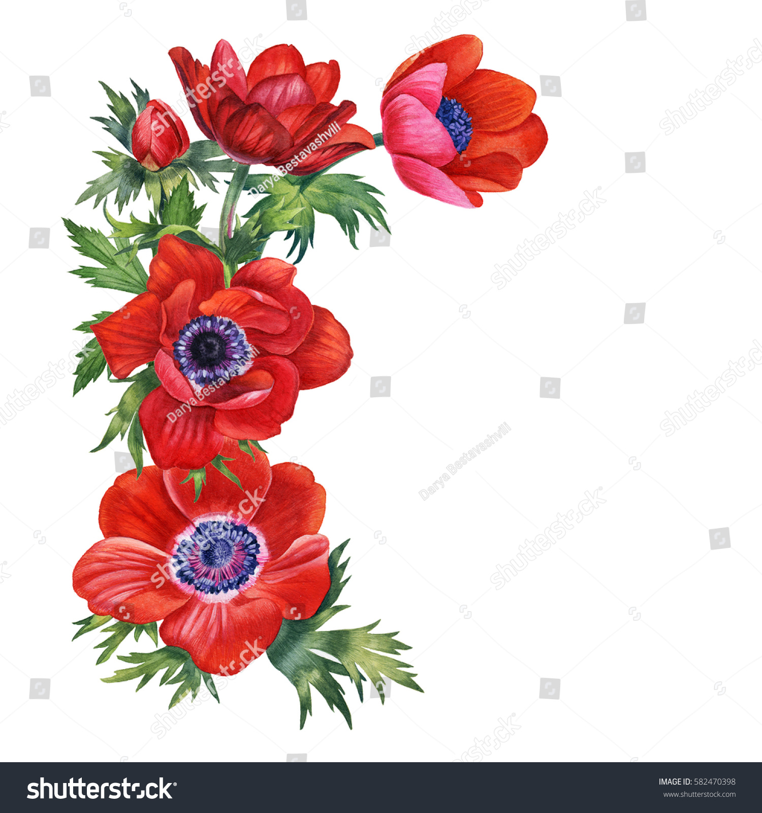 Watercolor Hand Painted Red Flowers Can Stock Illustration 582470398 ...