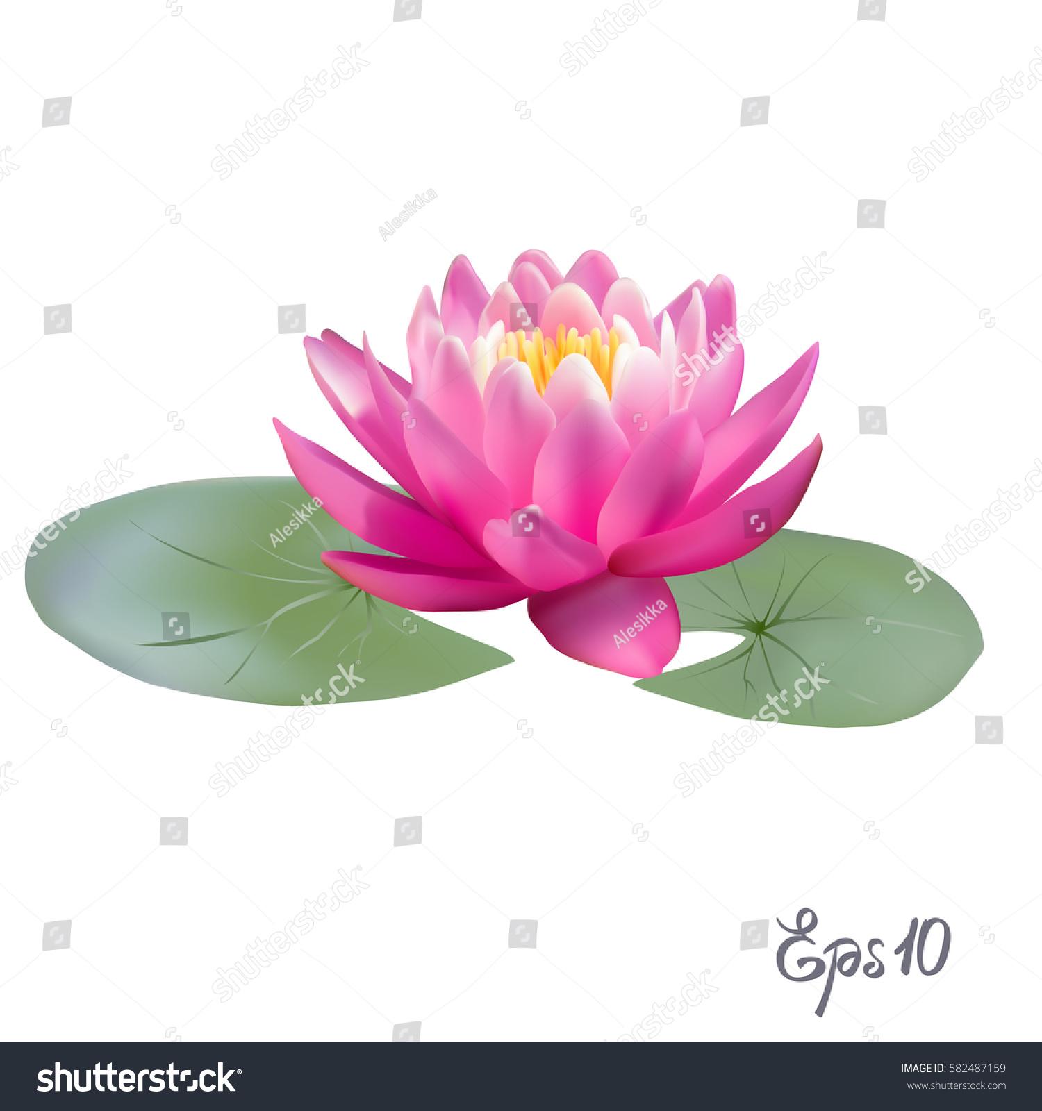 Beautiful lily lotus beautiful realistic illustration stock vector beautiful lily lotus a beautiful realistic illustration of a lily or lotus and lily isolated izmirmasajfo