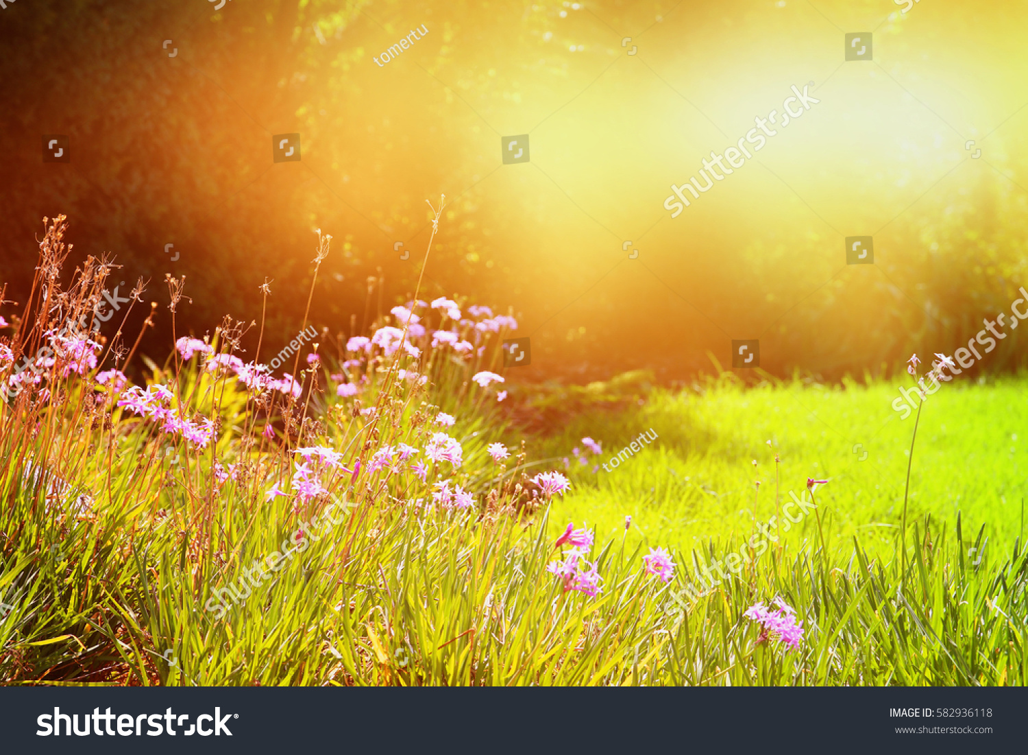 abstract dreamy photo spring meadow wildflowers stock photo (royalty