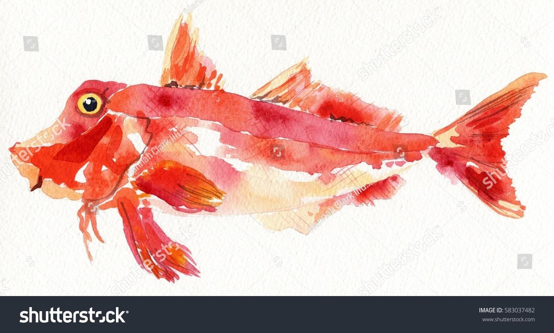 Watercolor Red Gurnard Fish Stock Illustration 583037482 - Shutterstock