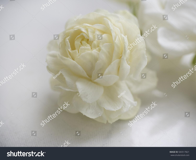 Jasmine White Flower That Good Smell Stock Photo Edit Now
