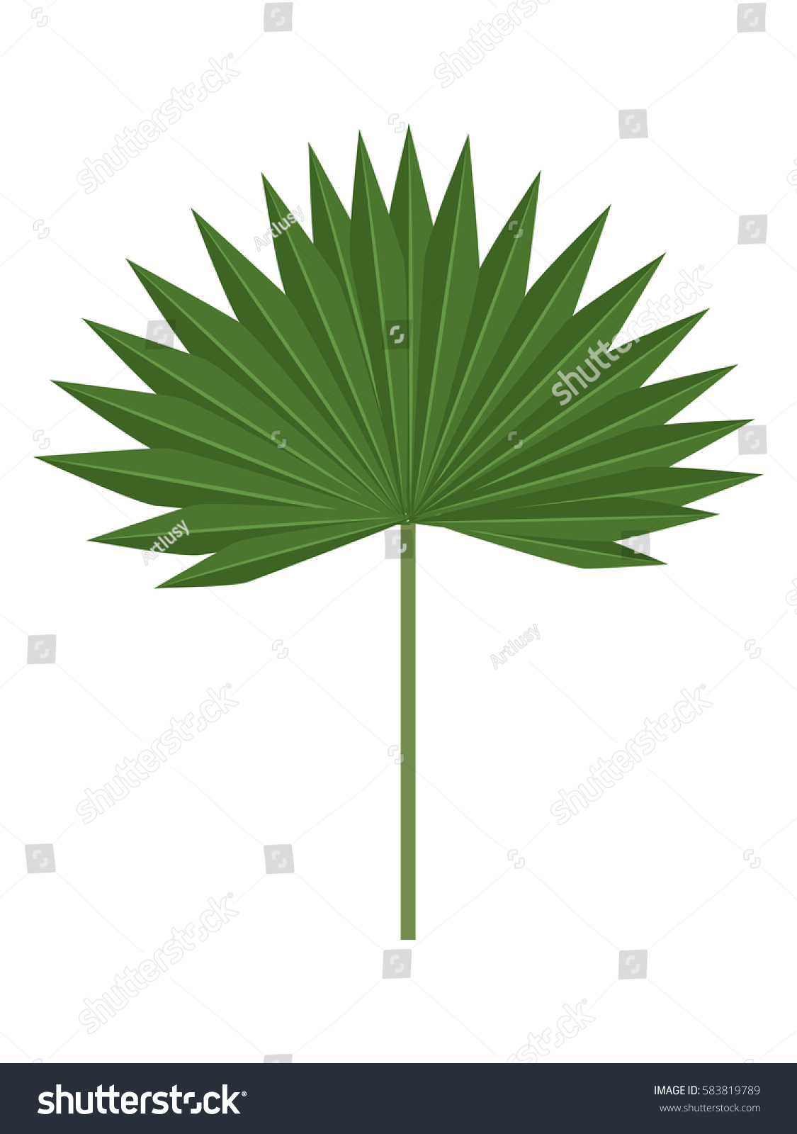 palm tree leaves isolated on white stock vector 583819789 shutterstock rh shutterstock com palm tree leaves vector free