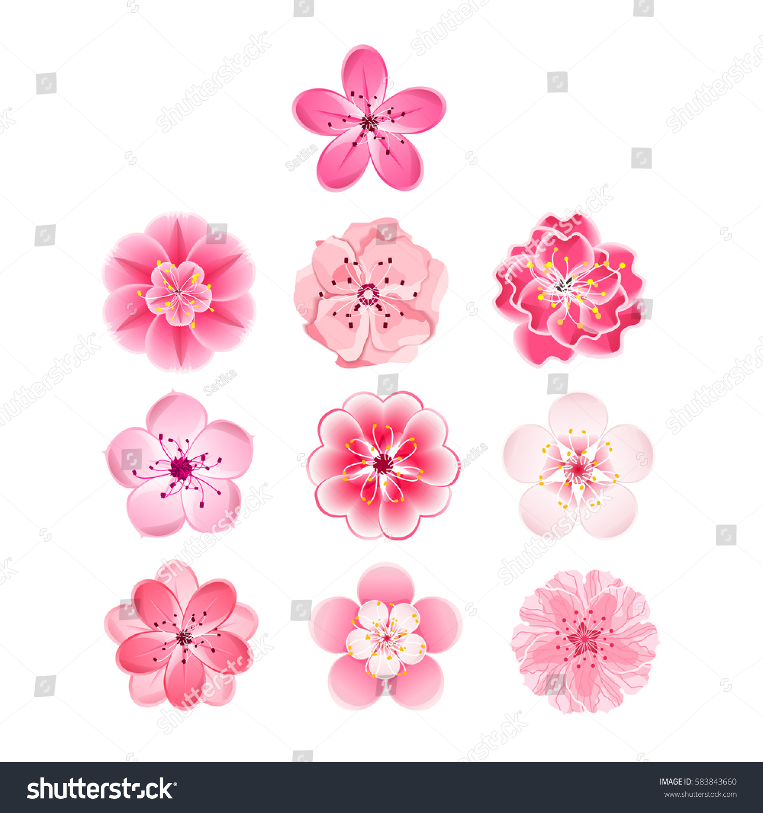 Isolated Flowers Sakura Set Cartoon Pink Stock Vector Royalty Free