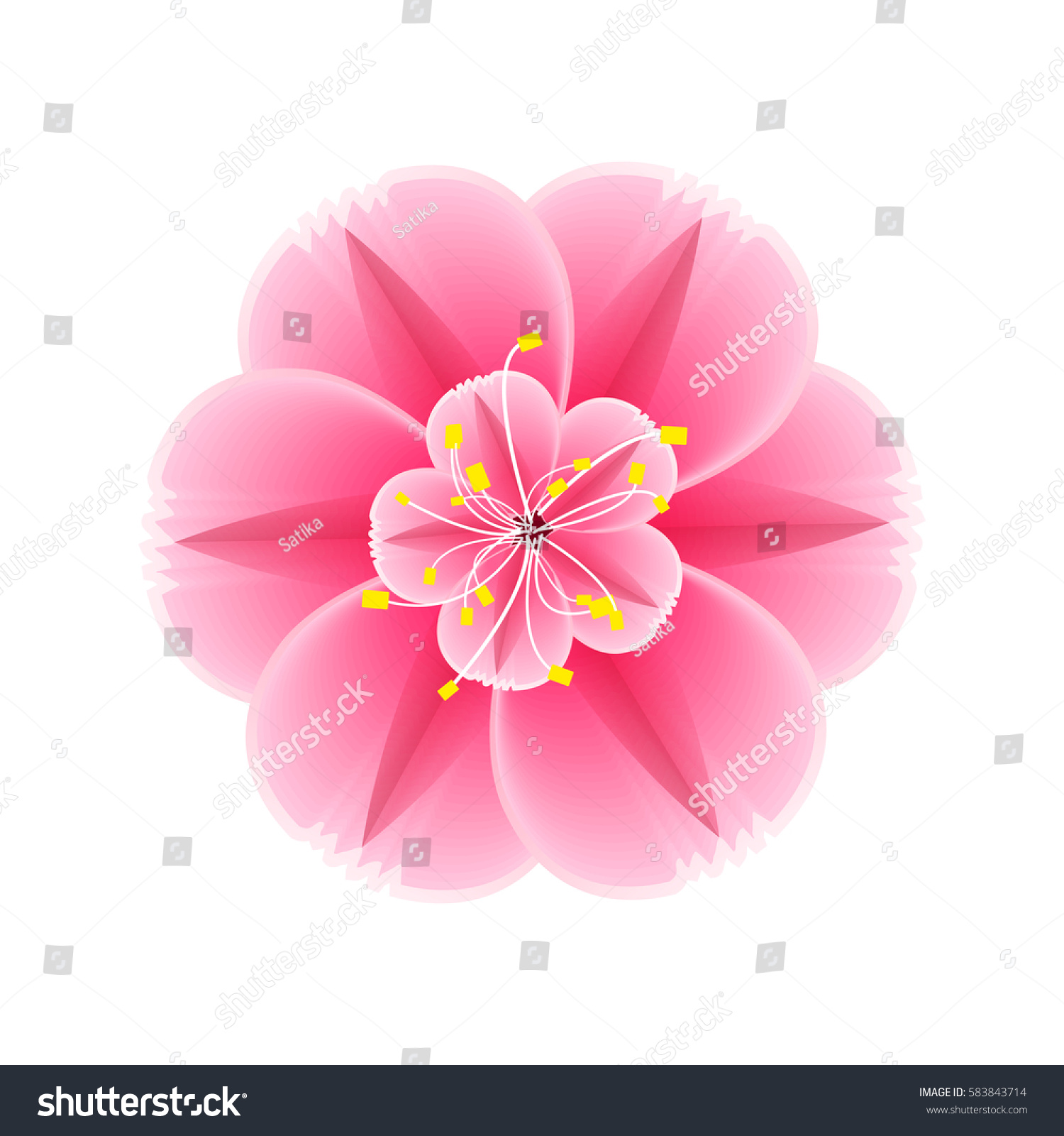 Isolated Flower Sakura Cartoon Pink White Stock Vector Royalty Free