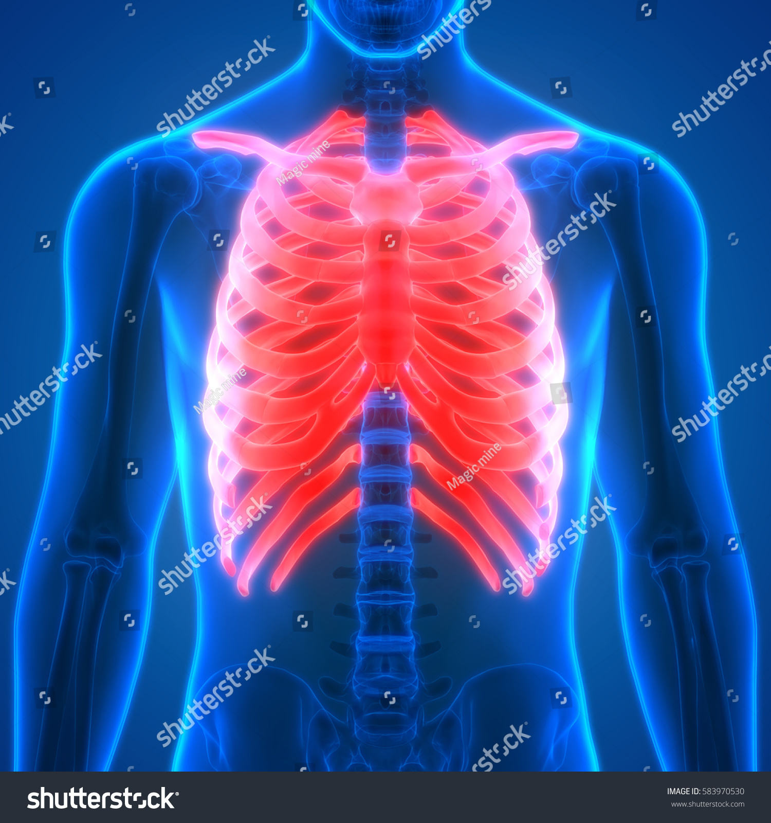 Human Body Bone Joint Pains Anatomy Stock Illustration 583970530 ...