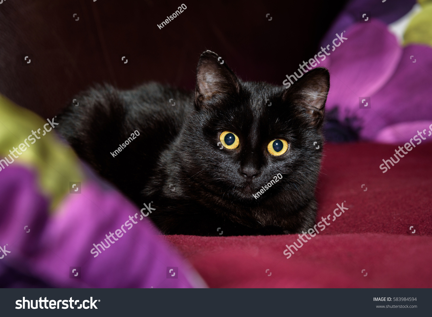 Black Cats With Gold Eyes